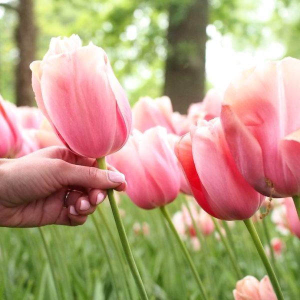 Amsterdam: kevät ja kukkaloisto!