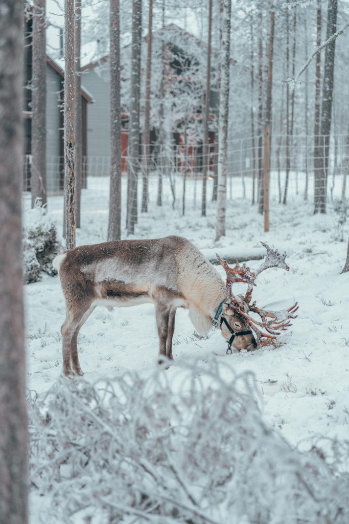 Matka Joulumaahan - Nova Skyland