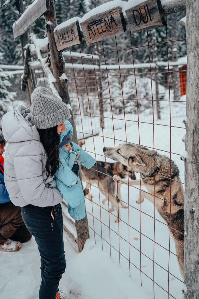 Matka Joulumaahan - Shaman Huskies