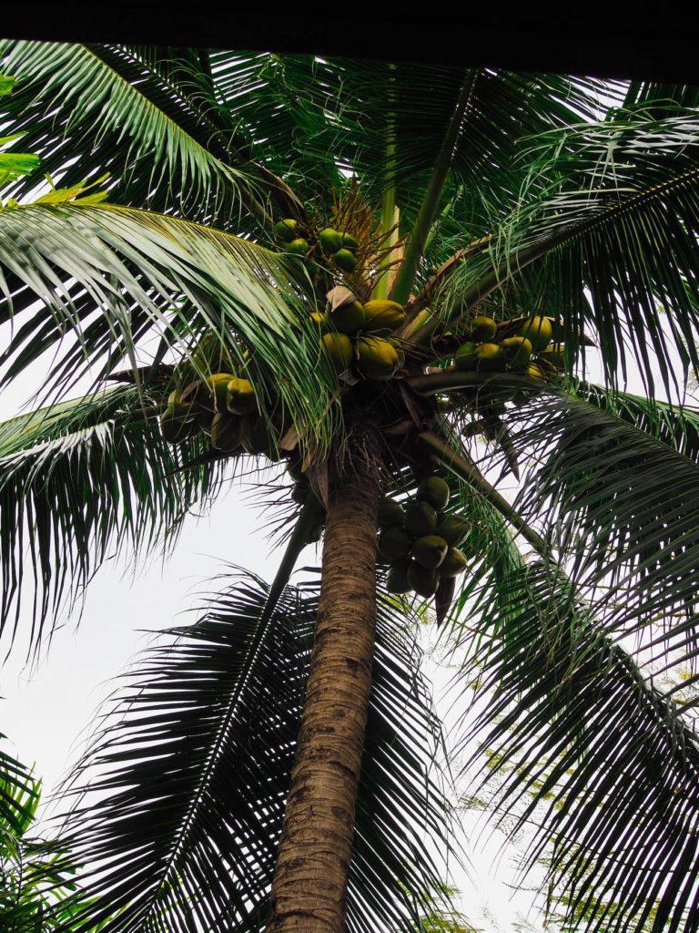 Thaimaa - Ao Nang: Saaria, herkkuja ja ananaksia