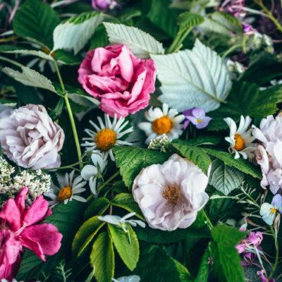 Vadelmanlehtitee – Teetä puutarhasta